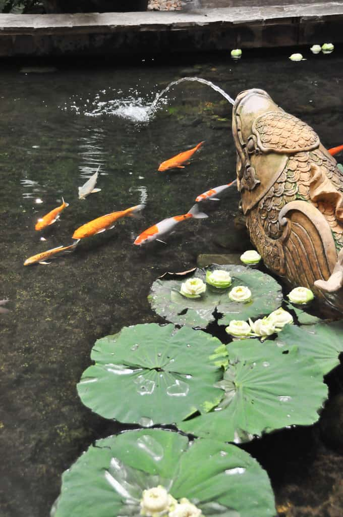 47 amazing backyard landscaping ideas interiorcharm for Koi pool cue