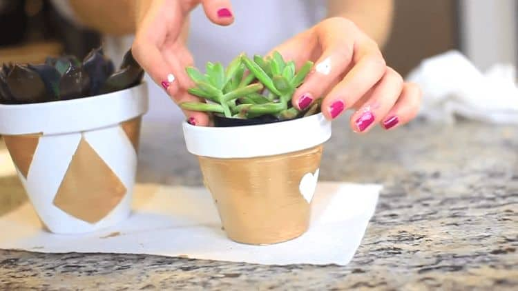 Painted flower pots are a way to transform any old planter into something personal and unique. Choose a preconstructed design, or make your own and let your plants grow from something that reflects your interests and personality.